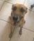 proyecto-alberge-de-mascotasbusca-socios-y-personas-interesadas
