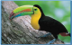 TUCANES-2-lindos-tucanes-pico-Arcoiris-tienen-3