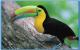 TUCANES--Vendo-pareja-de-Tucanes-de-3