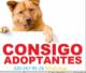 ATENCION--RECIBIMOS-OJO-WASP-3202479526-recibimos-reubicamos-perros